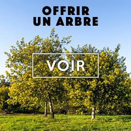 Offrir un arbre Reforest'Action